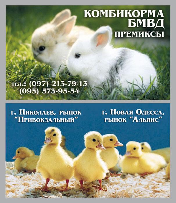 Заказать визитки в Николаеве